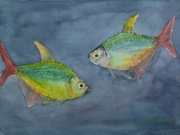 Blaue-Kolumbianer-A-columbianus-2012-36x48-Aquarell