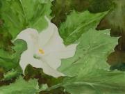 Stechapfel-2012-18x24-Aquarell