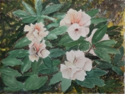 Rhododendron-2012-36x48-Aquarell